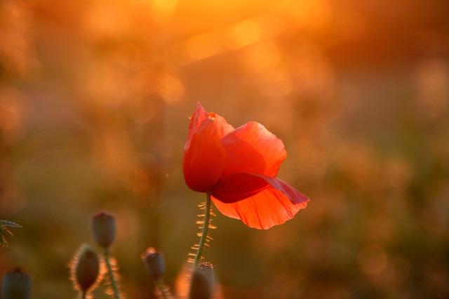 Image représentant une fleur lors d'un couché de soleil